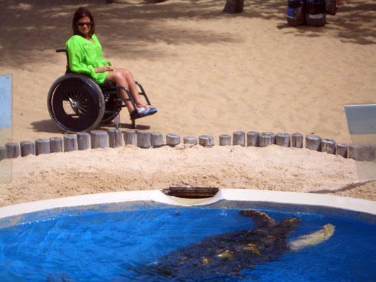 Cadeirante olhando para tanque com tartaruga no Projeto Tamar